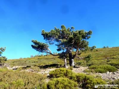 Peña Citores-Cumbres y Lagunas Peñalara; comarca sierra de gata sierra pobre de madrid el gasco la